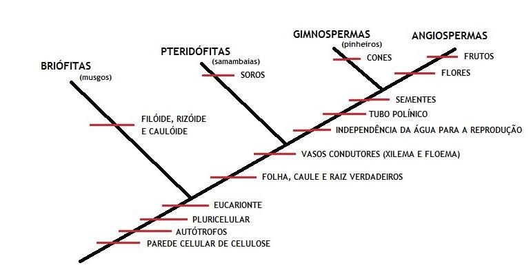 A evolução das plantas - Representação esquemática do grupo de plantas.